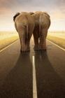 vignette_bf_imageAffiche_Les_elephants.jpg